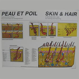 POSTER PEAU & POIL -